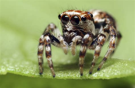 Are Spiders Attracted To Light by Common Spiders In South Africa Sciencing