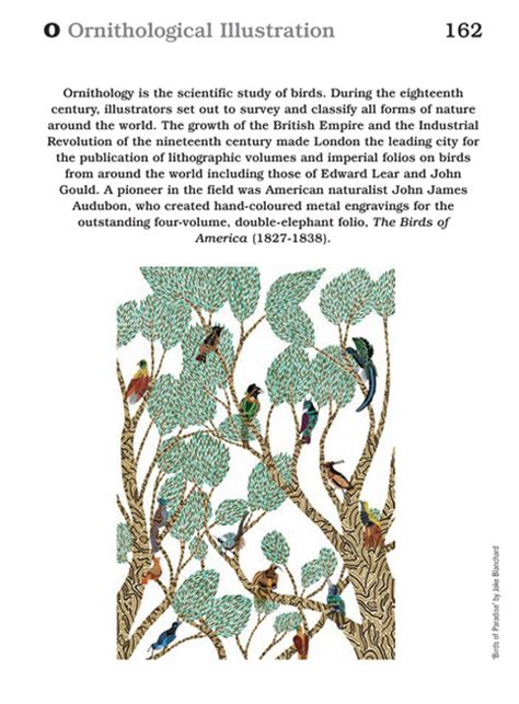 defintion of the week ornithological illustration