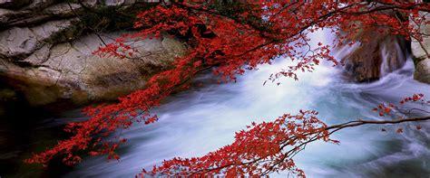 les couleurs de lautomne  faire visit hiroshima