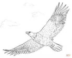 bald eagle in flight coloring page free printable