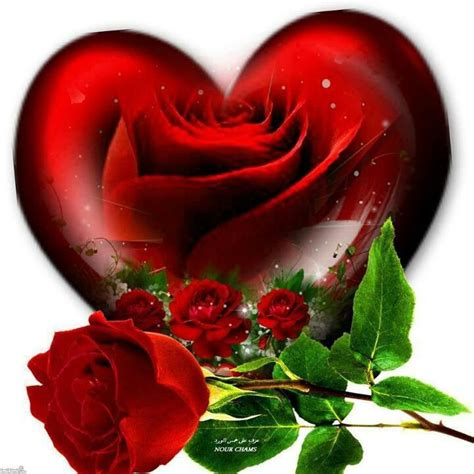 pictures of hearts and roses and roses follow your