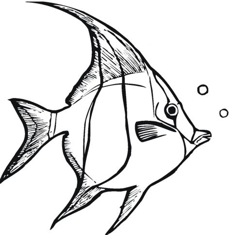 tropical fish coloring pages printable fish outline to colour clipart best