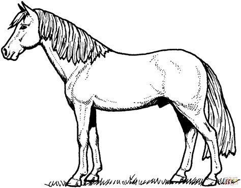 coloring pages of horses and ponies free horse coloring pages horse coloring pages