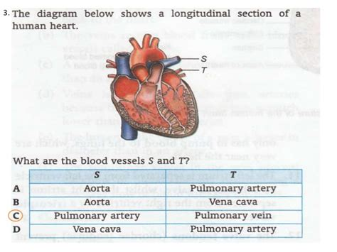 longitudinal section of the human heart chapter 1 transport 1 1 1 3