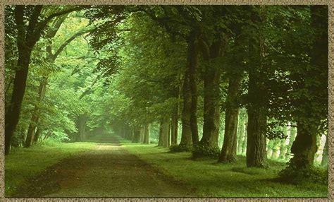 imagenes de paisajes y caminos fondo escritorio paisaje camino primaveral