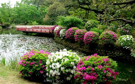 Flower Garden In Japan Lush Greenery Pictures Beautiful Gardens Wonderwordz