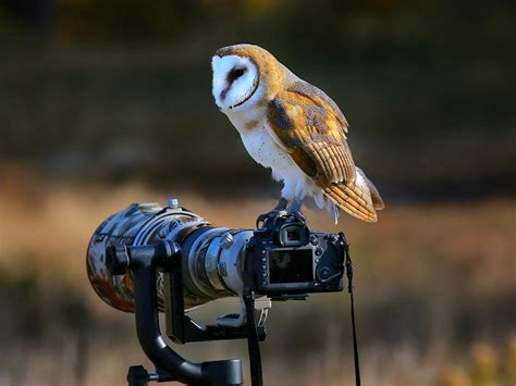 best wildlife photography 7 best places to enjoy wildlife photography holidayme