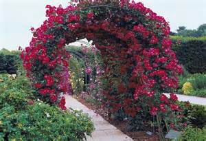 Climbing Flowers For Pergolas by Enhance Your Pergola Or Arbor With Climbing Flowers