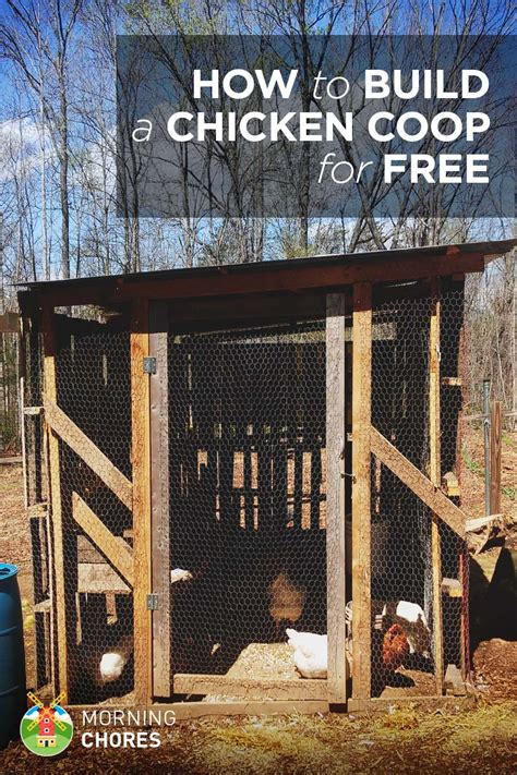 how to build a simple how to build a practically free chicken coop in 8 easy steps
