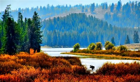 forest  water beautiful nature  autumn season