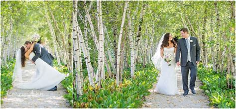 Wedding Backdrop Trees by Tree Backdrop Wedding Images