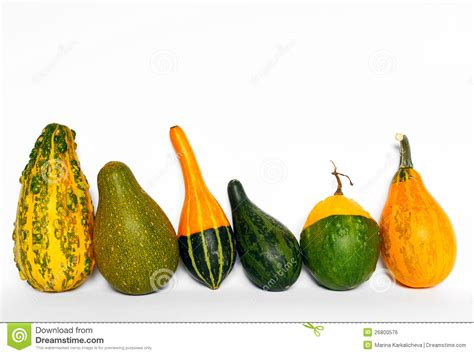 decorative gourds royalty free stock image image 26800576
