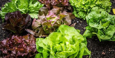 come fare un orto in giardino come fare un orto in inverno