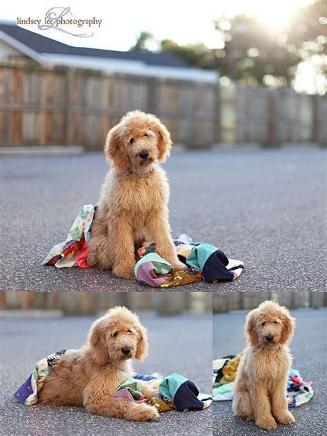 doodle god pet 69 best images about puppy on