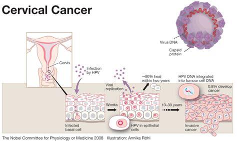 pap test e papilloma virus human papillomavirus hpv the unseen leading cause of