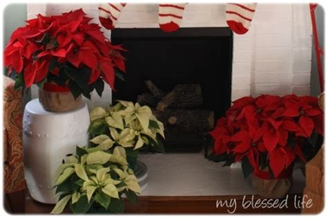 Decorating With Poinsettias by Decorating With Poinsettias