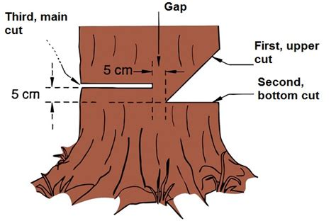 how to cut a tree diagram how to cut a tree with a chainsaw