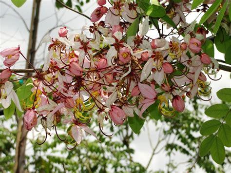 medium sized flowering shrubs flowering trees for the landscape freundfloweringtrees
