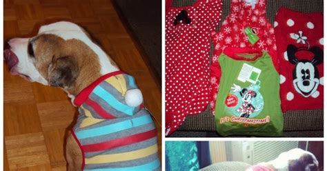 petsmart clothes winter from petsmart giveaway for pets pawsitively pets