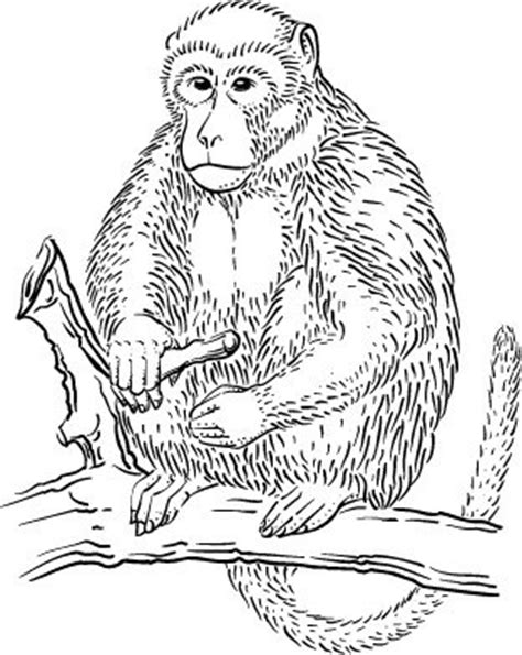 rhesus monkey coloring page links to rainforest coloring pages rainforests