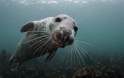 top underwater   national geographic  shot