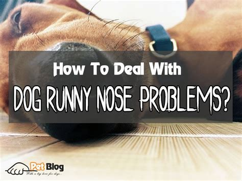 puppy runny how to deal with runny nose problems just another pet the4legged