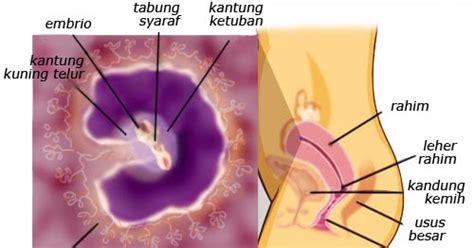Cara Gendong Bayi 0 Bulan minggu ke 1 12 kehamilan dan tips nya 2 doktermuslimah