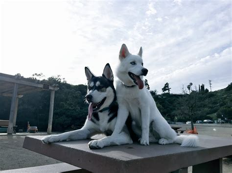joey graceffa s dogs joey graceffa on quot took to the park for the time today wolfie