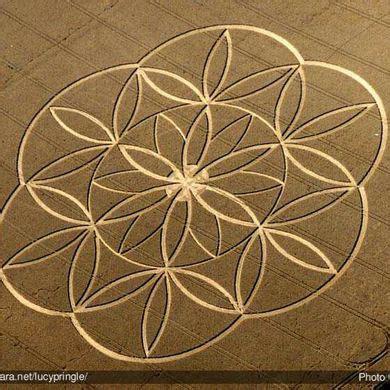 fiore della vita il fiore della vita lo schema della creazione