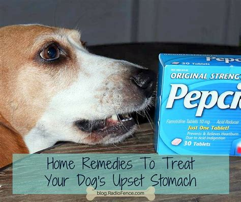 puppy upset stomach radiofence home remedies to treat your s upset stomach