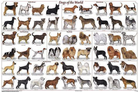 dogs poster dogs of the world poster