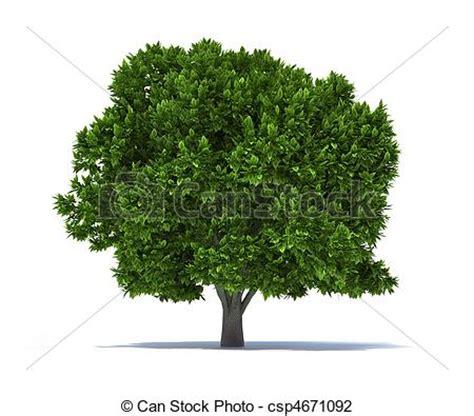 albero clipart clipart di albero 3d render illustrazione di 224