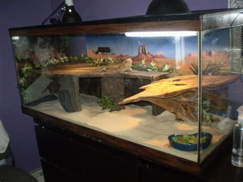 bearded dragon cage lighting image result for 90 gallon gecko tank gecko pinterest