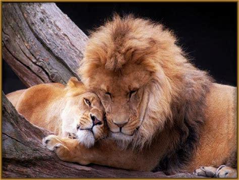 descargar imagenes sarcasticas para bb fotos de tigres bebes para descargar archivos imagenes