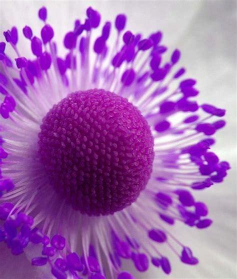 imagenes de flores unicas 17 best images about flowers on pinterest colorful