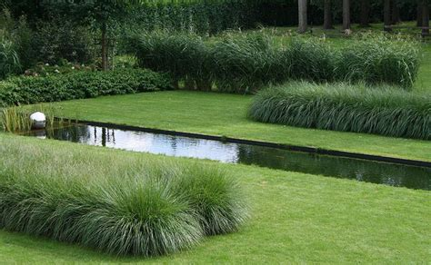 two types of grasses a pennisetum and a miscanthus are
