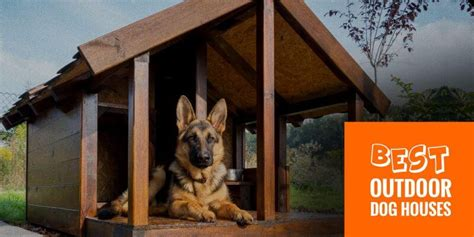 best outdoor dog houses dog breeding start run and grow a kennel