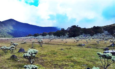 Kaos Gunung Gede Pangrango Tebing mendaki gunung tanpa harus cuti kerja dekat kota jakarta