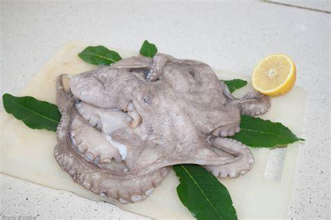 come cucinare il moscardino cefalopodi ricette di cucina