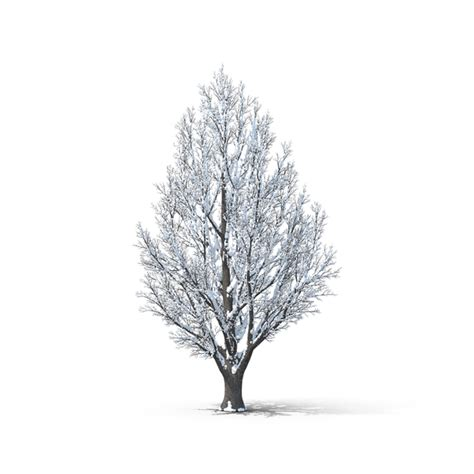 Tree PNG Images & PSDs for Download PixelSquid