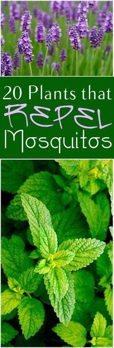 get rid of the bug spray and repel mosquitos naturally