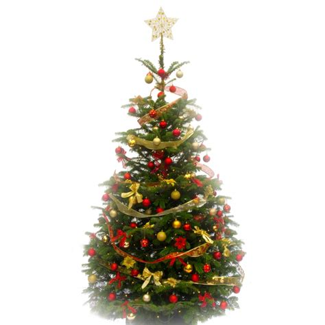 where to put christmas tree festive decorated christmas tree pines and needles