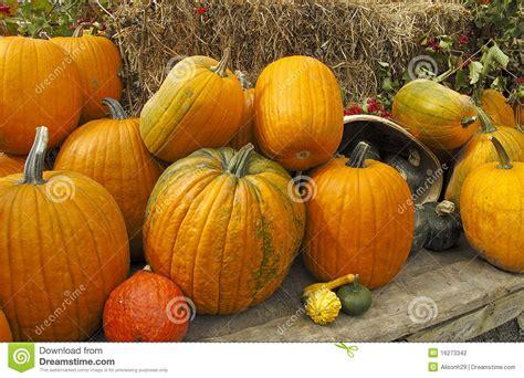 Pumpkins For Sale Pumpkins For Sale Stock Photography Image 16273342