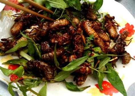 cuisine v馮an insect delicacies from vietnamnet
