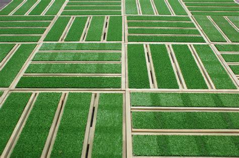 terrassenfliesen kaufen 180 st 252 ck terrassenfliesen holz mit kunstrasen 40 x 40 cm