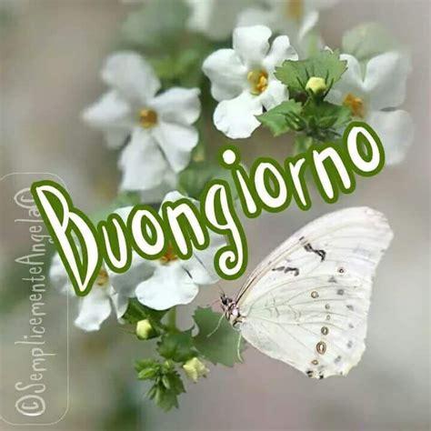 farfalle con fiori immagini buongiorno con farfalle e fiori bianchi