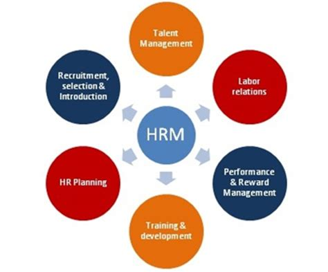 human resource management a gratifying career path let s more education education