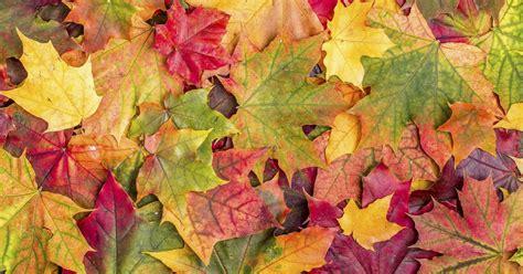 Herbstlaub Garten by Herbstlaub Verwendungstipps Aus Unserer