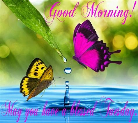 imagenes de good morning tuesday good morning wishes on tuesday pictures images