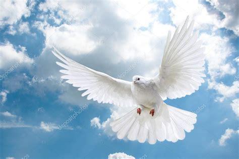 Imagenes De Palomas Blancas Gratis | palomas blancas en el cielo foto de stock 169 gobba 114375558